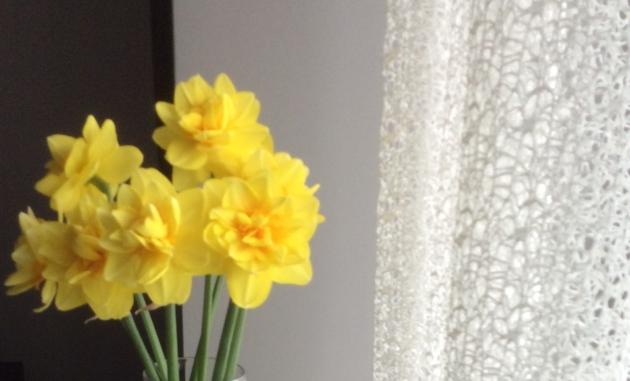 daffodils-e1526863346678.jpg